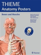 Michael Schuenke, Erik Schulte, Udo Schumacher, Michael Schünke - Thieme Anatomy Poster, English Nomenclature, Bones and Muscles
