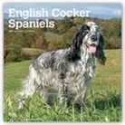 Not Available (NA) - English Cocker Spaniels 2019 Calendar