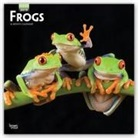 Not Available (NA) - Frogs 2019 Square wall Calendar