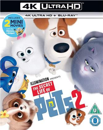 The Secret Life Of Pets 2 (2019) (4K Ultra HD + Blu-ray)
